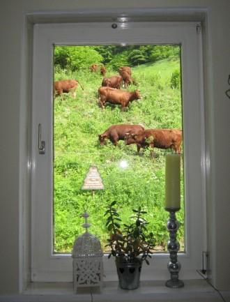 Schöne Aussicht auf Kühe, die auf einer Almwiese in Lerbach weiden., Foto: Claudia Szemeitat