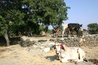 Auf dem Weg zum Fort von Kumbhalgarh: Kinderarbeit!, Foto: Robert Niedermeier