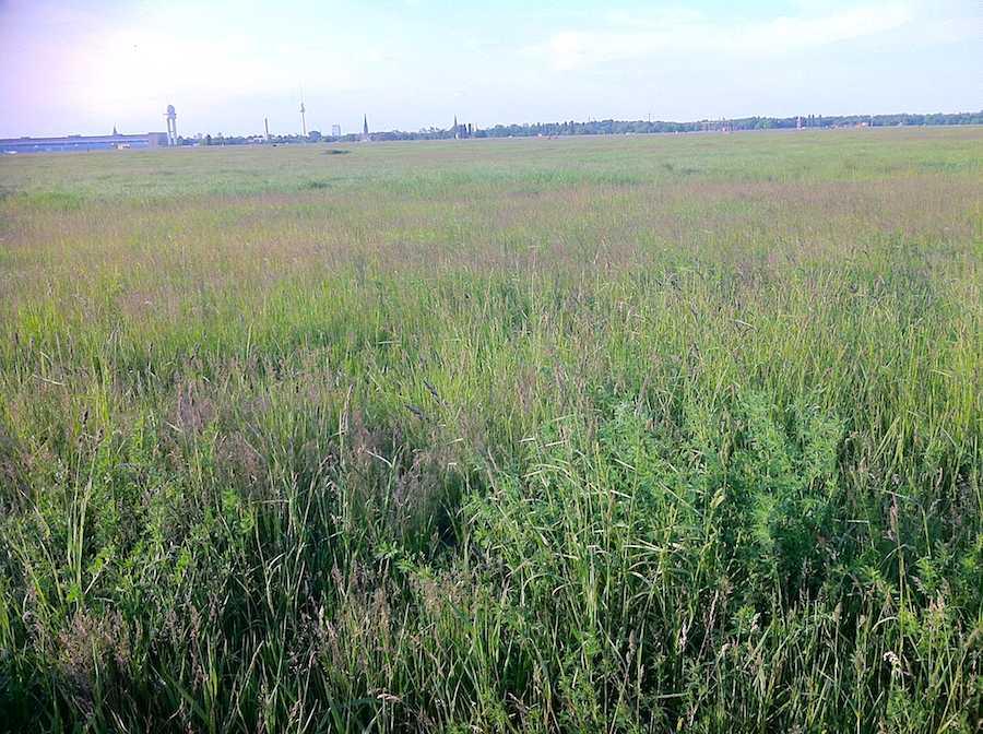 Tempelhofer Freiheit: Blühende Wiesenlandschaft