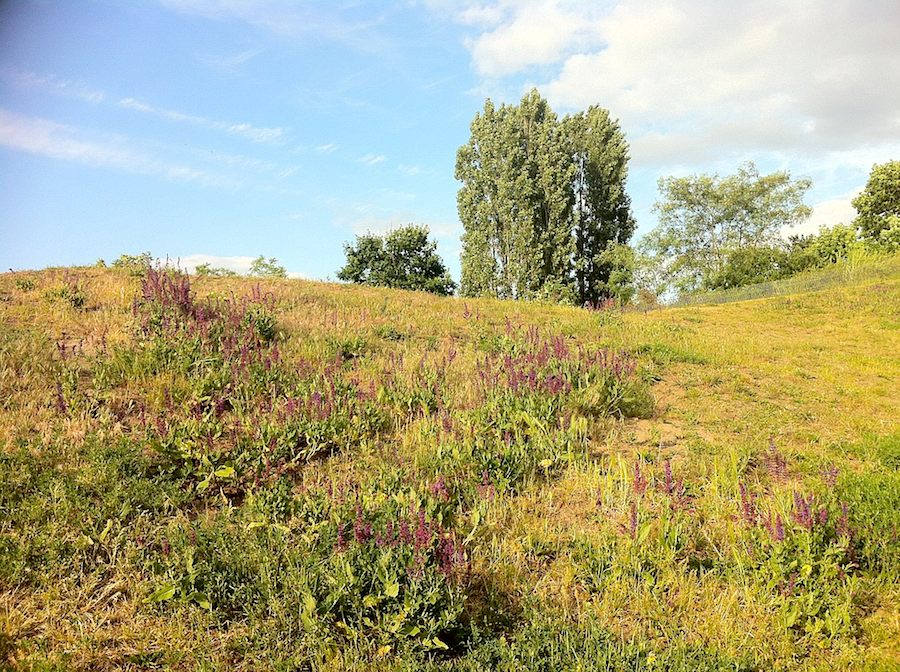 Malerische Schönheit im Görlitzer Park