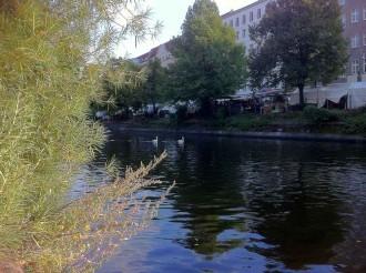 Schwäne in Kreuzberg 36 auf dem Landwehrkanal, hinten im Bild: Der Türkenmarkt