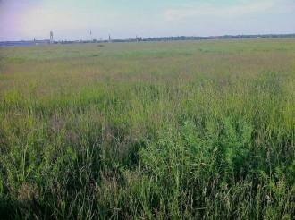 Spätsommerwiesenlandschaft auf der Tempelhofer Freiheit