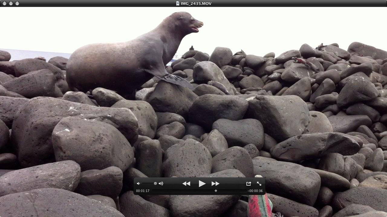 Seelöwe-Videoausschnitt, was da so alles kreucht und fleucht, während der Seelöwe uns scheucht