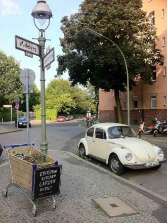 Minigarten-Beetim Norden Neuköllns ins neugierige Auge: SamtKongo-Bohnen aus Äthiopien, liebevoll in einem Berliner Einkaufswagenangelegt.