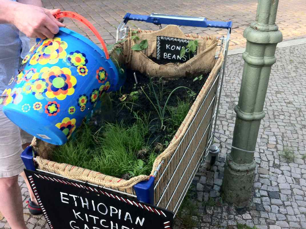 Ethiopian Kitchen Garden: Begossen am 13.07.2013