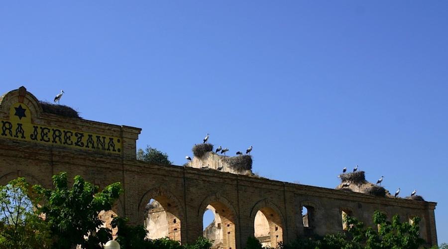 Storchen-Vögel nisten bei Jerez