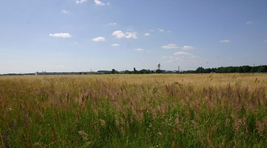 Wiesenmeer auf der Tempelhofer Freiheit, Foto Robert Niedermeier