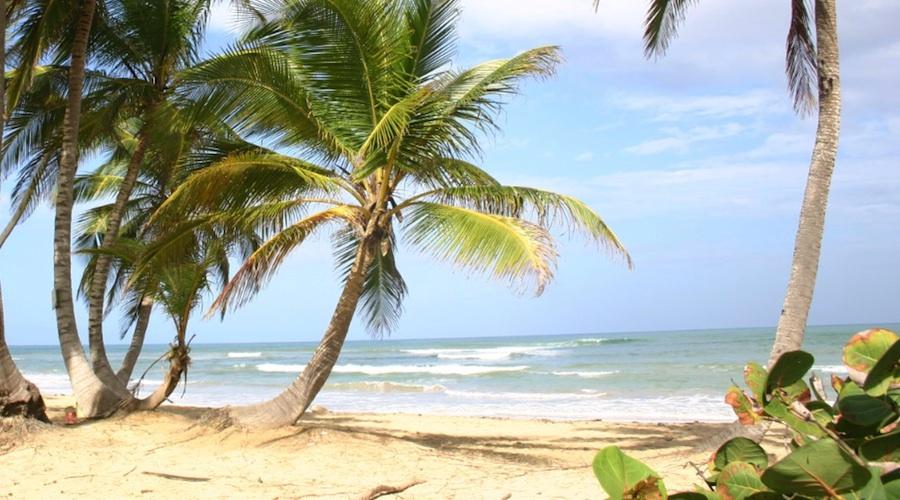 """Saona-Strand: """"Es sind die Wellen, die den Sand so fein machen"""", sagt Mario, greift eine Handvoll des zuckerfeinen Urlaubertraums und lässt den Karibik-Sand von einer Brise davon tragen. Seit Urzeiten mahlen die Kräfte des Atlantiks unentwegt grobe Steine zu mikroskopisch kleinen Sandkörnern. """"Überall mischen sich auch fein geriebene Muschelschalen in den weichen Sand: """"Das macht den Sandstrand so hell"""", weiß Mario: """"Schau genau hin, es glitzert bunt."""" Das liegt am Perlmutt, aus dem das Innere der pulverisierten Muschelschalen besteht, welches in Pastellrosa, Himmelblau und Grün schimmert. Dennoch strahlt der Sandstrand einheitlich hell im Sonnenschein. Das klare Wasser lässt derweil tief blicken. Foto: Robert Niedermeier"""