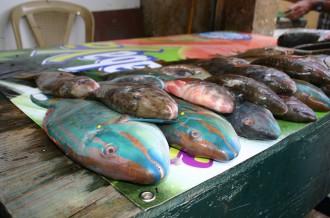 Tote Fische auf dem Markt in Higüey i, Foto: Robert Niedermeier