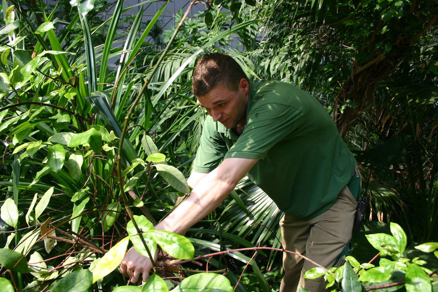 Der Tropensimulator mit echten Pflanzen braucht viel Pflege