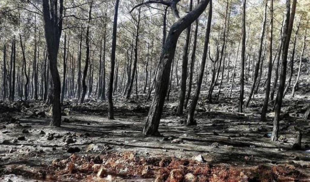 Verbrannter Pinienwald bei Fethiye an der türkischen Riveria