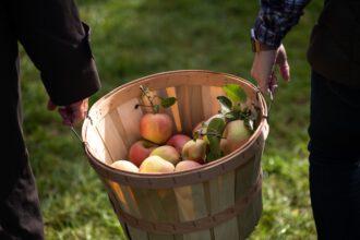 Lewin Farm in Calverton. Dort lassen sich im Herbst nicht nur Äpfel, sondern auch Tomaten, Kürbisse und frischer Pfeffer ernten.