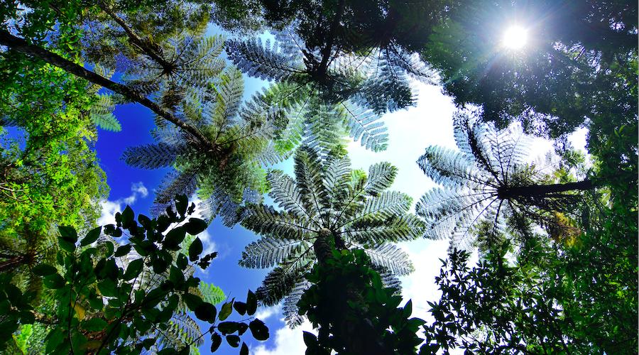 Amami-Ōshima - Der subtroische Kinsakubaru-Urwald ist Heimat des Hikagehego, einem lebenden Fossil. ©OCVB_KPVB.JPG, Screenshot