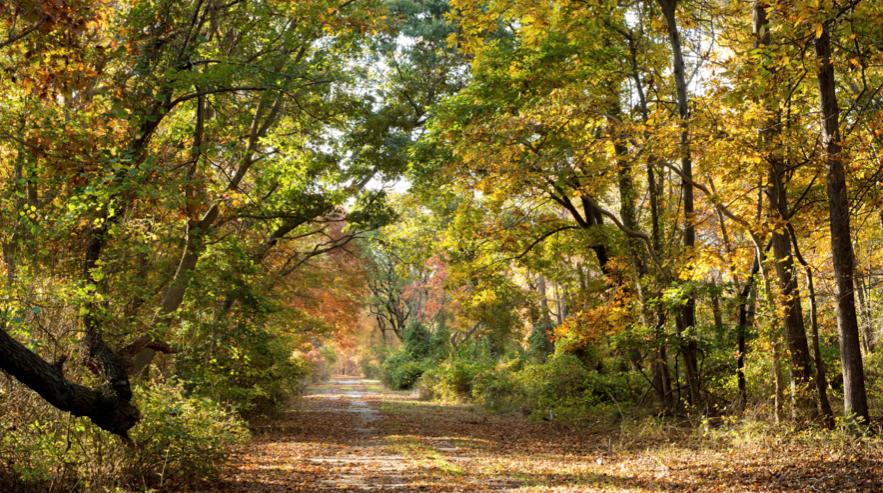 Herbst-Impression auf Long Island