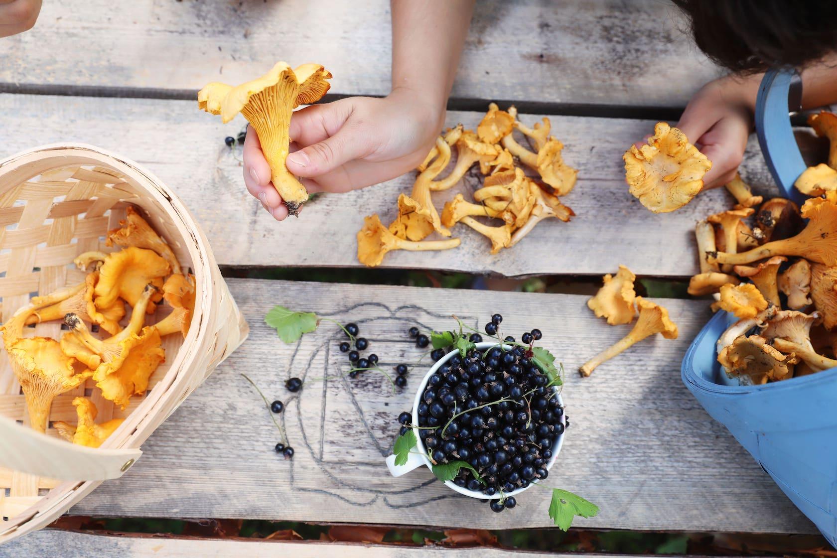 Pilze und Beeren aus der Natur Finnlands sammeln