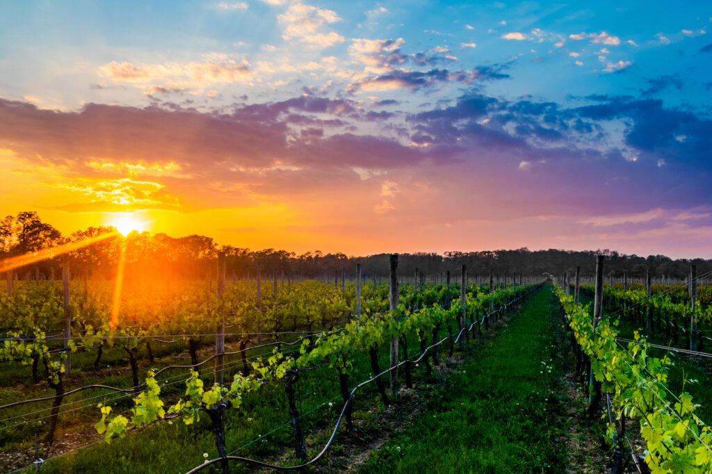 Wine-Escape auf Long Island Der North Fork von Long Island ist ein ca. 50 Kilometer langer Küstenabschnitt am Meer mit diversen Farmen, Boutique-Weingüter und kleinen Hotels